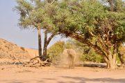 valle hoanib, namibia, desierto, elefantes