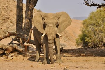 Namibia valle huab